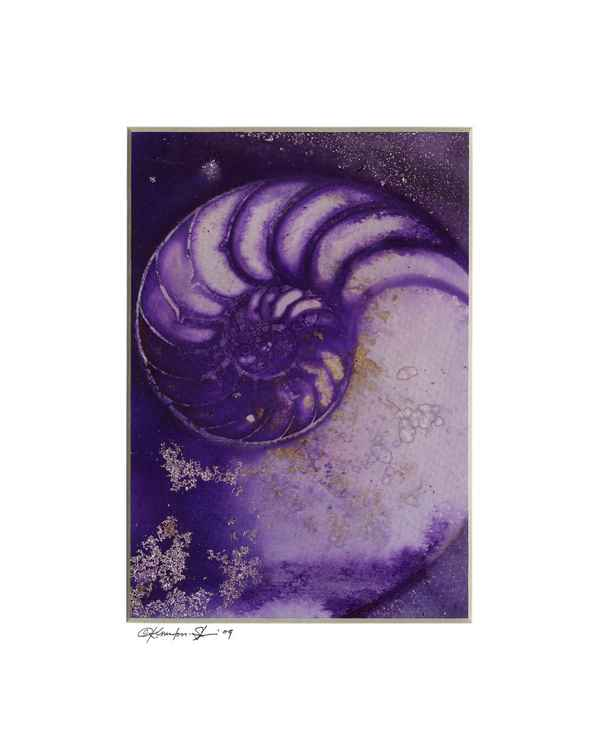 Sea Shell Watercolor Painting, Ocean - Nautilus Shell No. 934