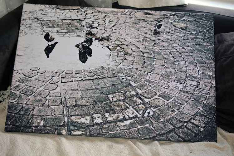 Pigeons in a Puddle -