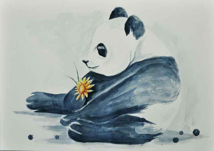 Panda Study 01