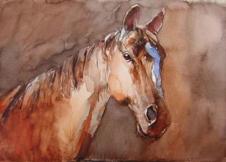 horse in the shadow III