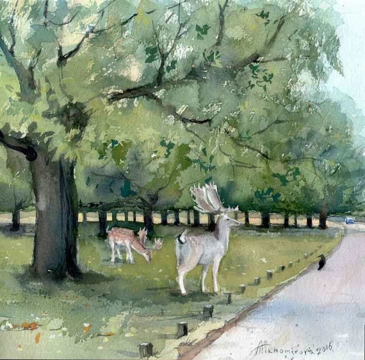 The Deers of Richmond Park