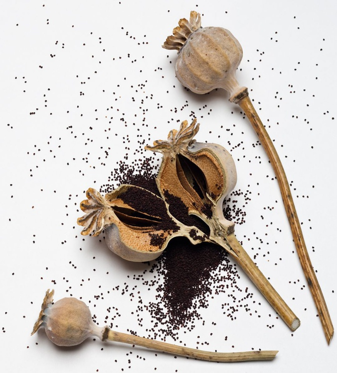 Poppy Seeds - Image 0