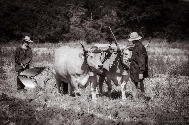 The jobs of yesteryear, the ploughman - Image 0