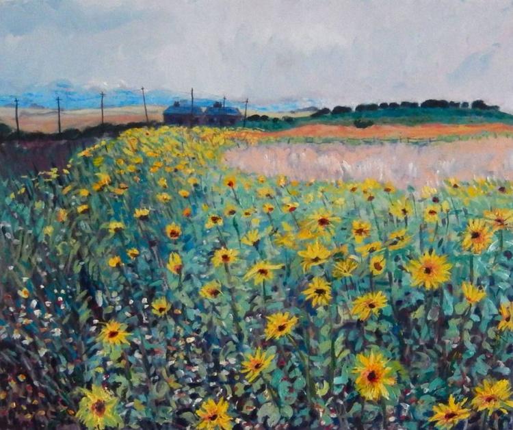 Sunflowers Near St Monans, Fife - Image 0