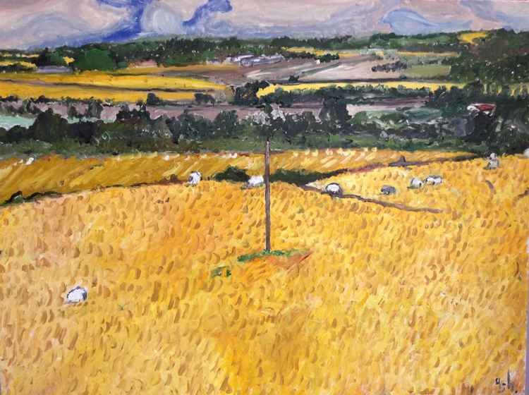 Sheep in fields of Hay