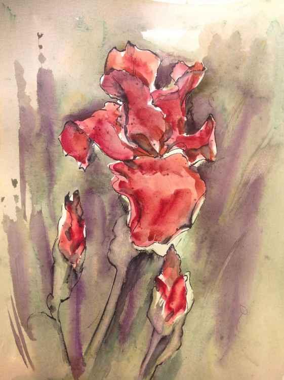 Red Iris -