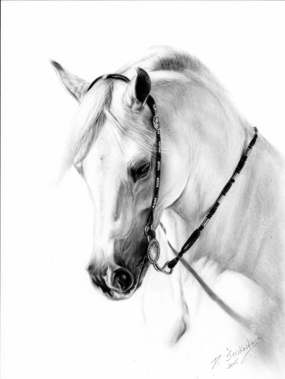 White Arabian - Image 0