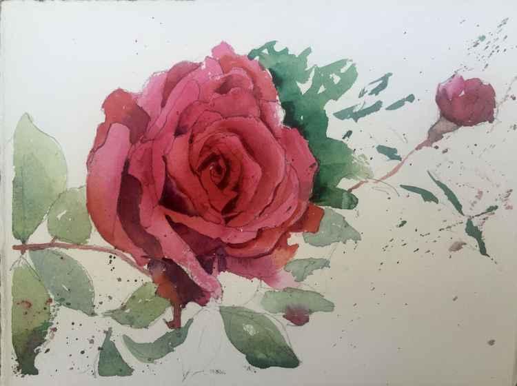 Wild Rose -