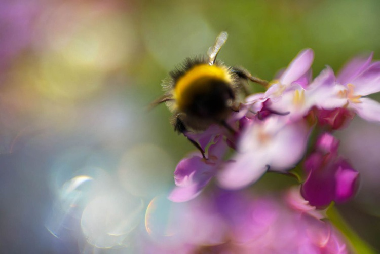 Sprites in the Enchanted Forest  - Bee 3 - Image 0
