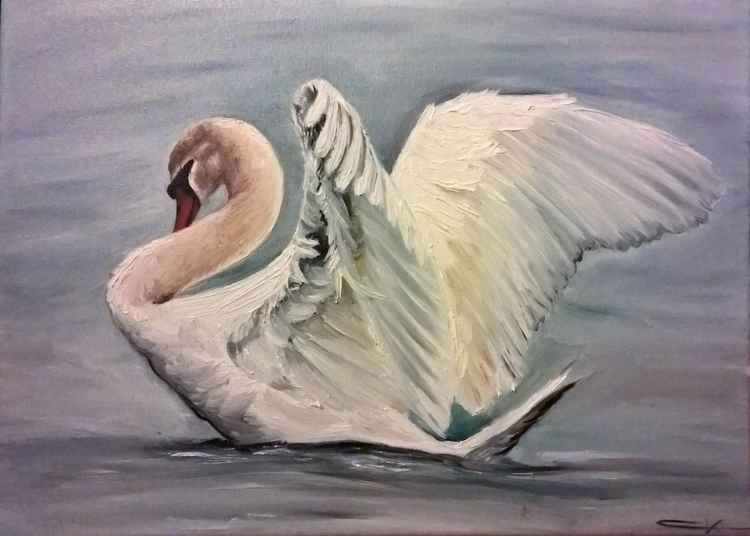 Swan -