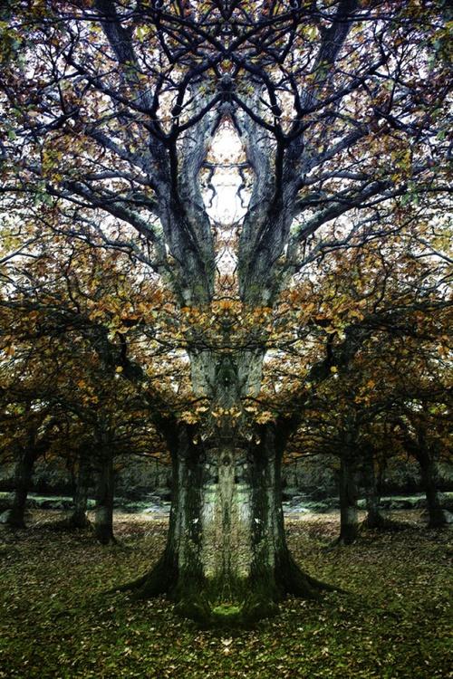 "Tree Being - Symmetry Series - 20"" x 30"" Giclée Photorag 308 - Image 0"