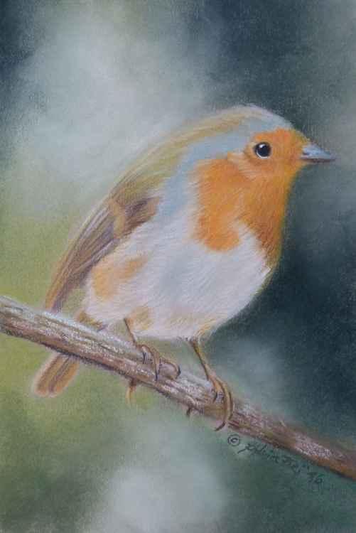 Robin Bird -
