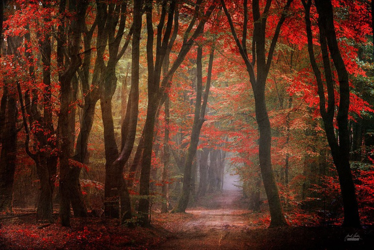 Forest realm of your heart - Image 0