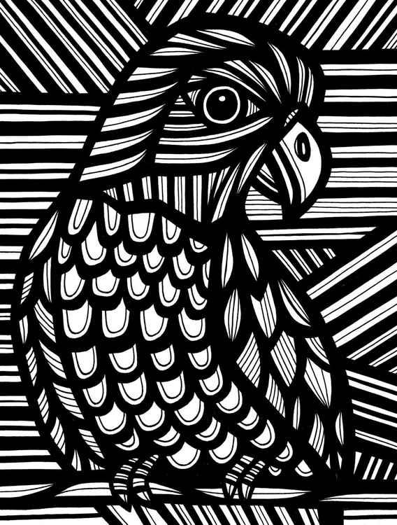 Bird Parrot Original Drawing -