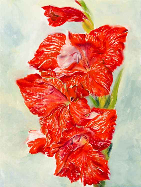 The Red Gladiolus -
