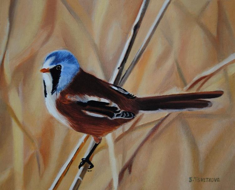 Colored Bird - Image 0
