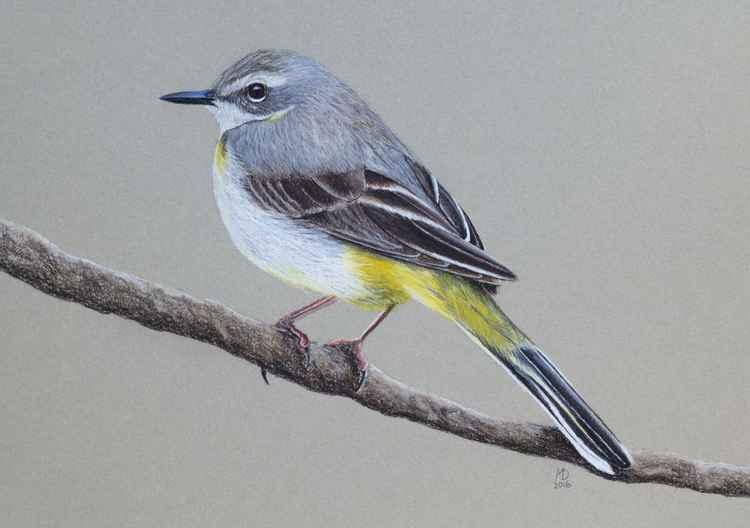 "Original pastel drawing ""Grey Wagtail"" -"