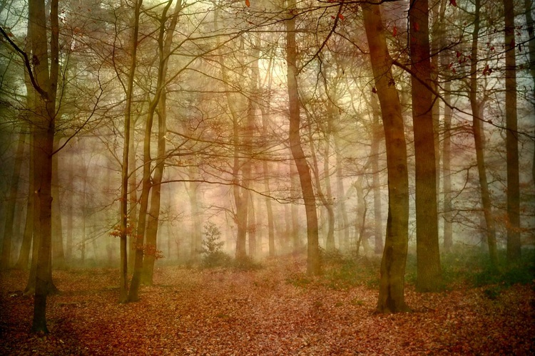 Fairyland Forest - Canvas 75 x 50 cm - Image 0