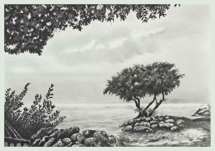 Monterey Cypress Tree Charcoal Drawing -