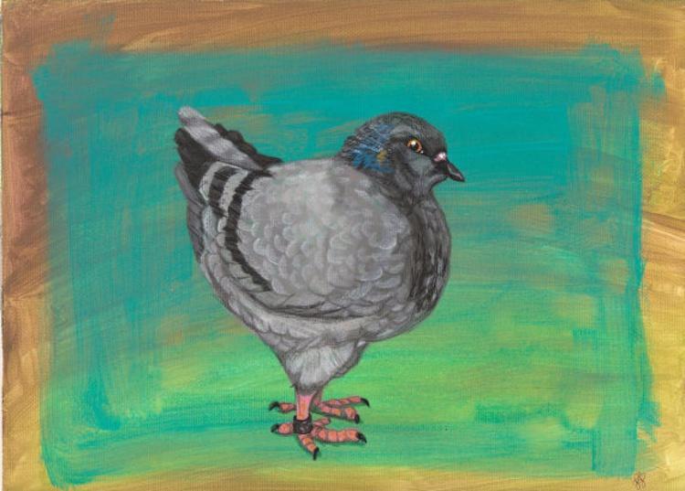 Pigeon portrait - Image 0